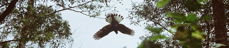 BirdSL
